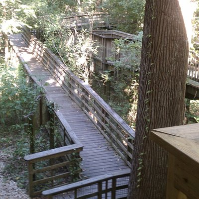 View of the wlakway up to the elevated Nature Station.