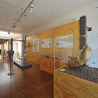 Sala dei grandi mammiferi