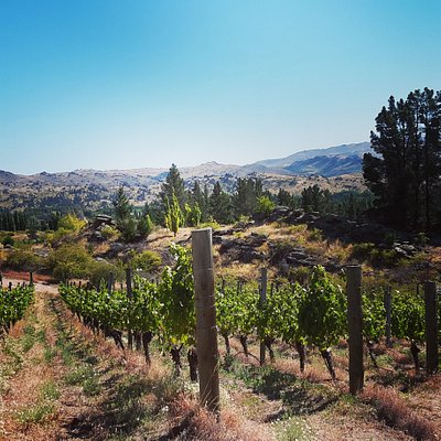 Many of our vineyards are on steep slopes.