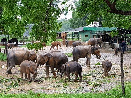 Udawalawe Elephant Transit home