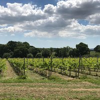 Our vineyard faces the South Downs with a beautiful view