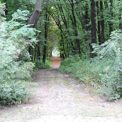 A side path