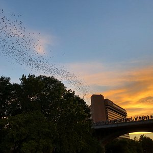 This shows one of the lines of flying bats that went over our heads.