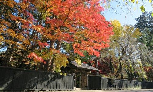 秋の紅葉は、一面燃えるように明るい景色をお楽しみいただくことが出来ると思います。