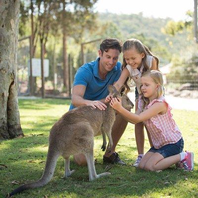 Get up close with Australian Wildlife including Kangaroos