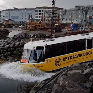 Splashing into the Reykjavik harbor