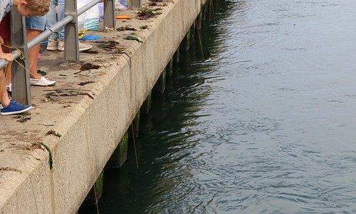 Mudeford Quay, crabbing