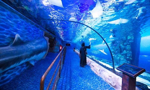 Dubai Aquarium & Underwater Zoo - Second floor