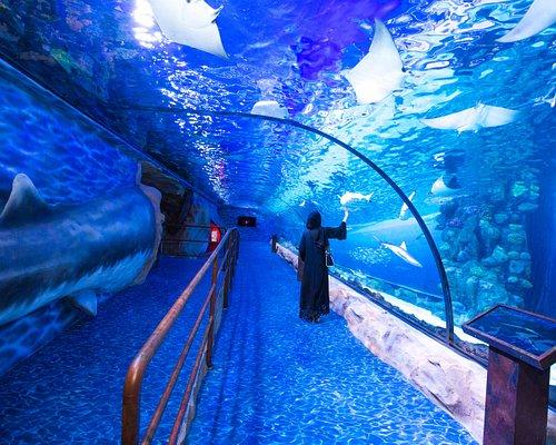 Dubai Aquarium & Underwater Zoo - Second floor