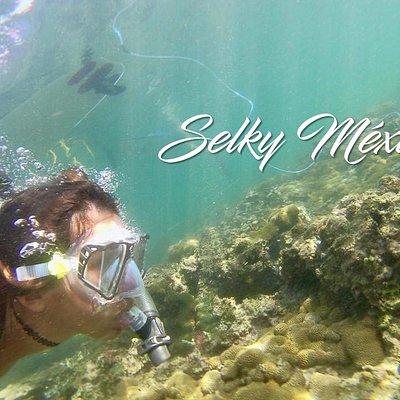 Snorkel en Veracruz