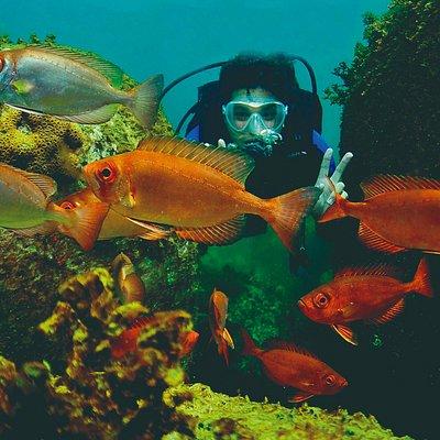 Peixes Olho de Cão - Ilha do Arvoredo