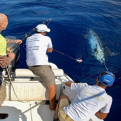 Blue Marlin 650 pounds Cath&Release