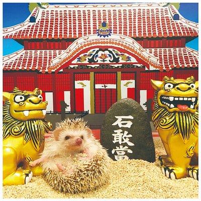 ハリネズミが暮らすのは「首里城」、「宮古島ビーチ」、「キャンプ場」など 沖縄にちなんだスポットをはじめ、「ベッドルーム」、「キッチン」、「お庭」などを表現した 全10種類の個室ケージがあります