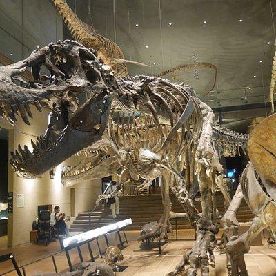 館内の恐竜骨格展示