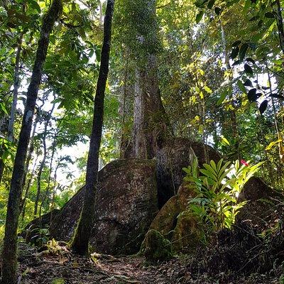 The Ma Tree
