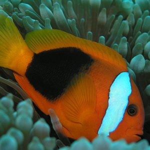 Meet Nemo