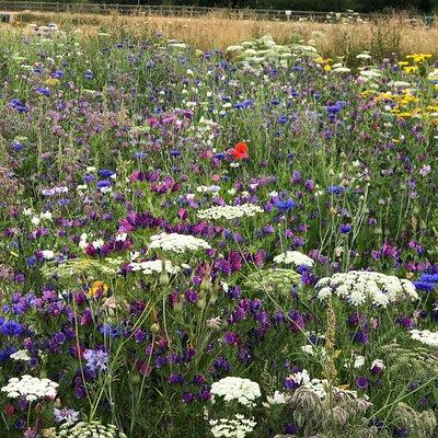 Wild flower areas....beautiful