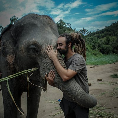 Hug the elephant