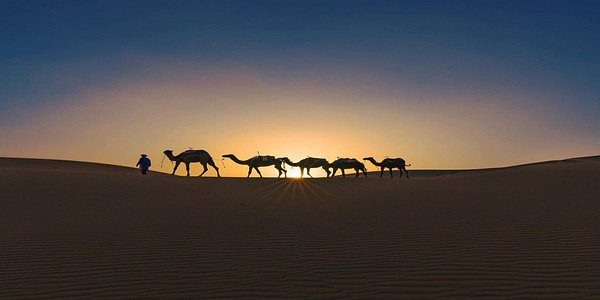 camels pictured at the sunset, in Erg Chigaga
