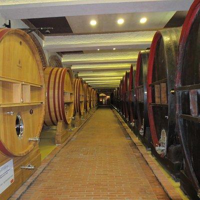 New oak barrels vs old oak barrels at Tikves Winery.