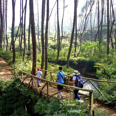 hiking menyusuri hutan