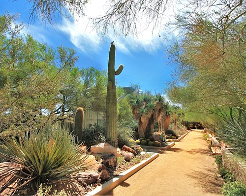 The Springs Preserve Botanical Garden features thousands of Mojave Desert and desert-adapted pla