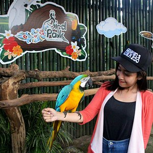 Berfoto bersama burung Macaw Biru Emas