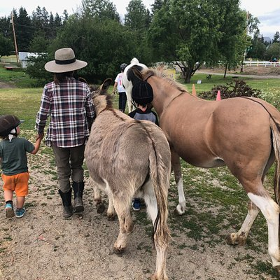 Join one of our programs like Horsing Around or book a horse interaction ahead of time!