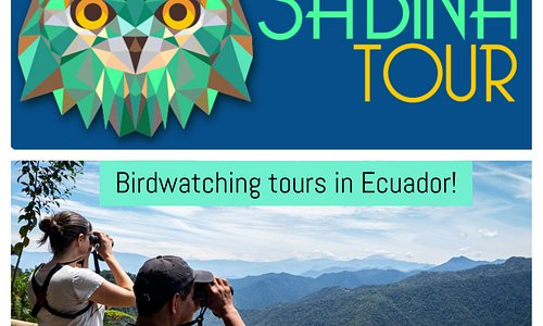 Birdwatching in the Andes of Ecuador!