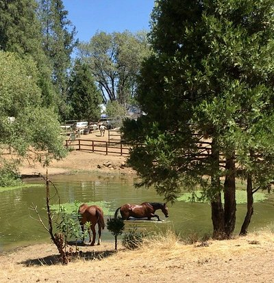 The ranch is set amongst the trees on a beautiful 40 acres