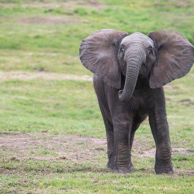 Elephant at West Midland Safari Park