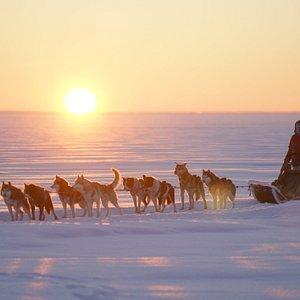 Экспедиция на собачьих упряжках от эко-комплекса Husky Moa