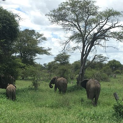 A group of Elephants on our way to one of the lodges