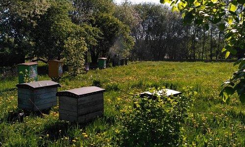 pasieka (apiary)