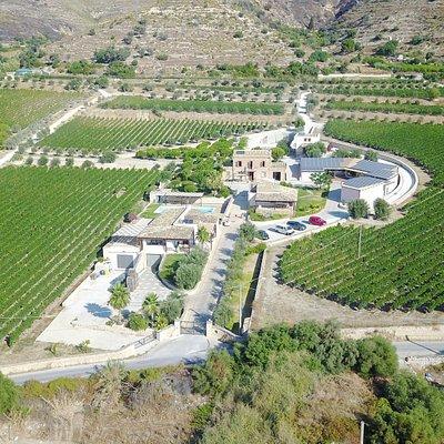 vista dall'alto della Tenuta , in questa foto si vedono i vitigni principali della Cantina Palme
