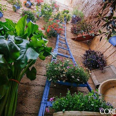 El Patio de la Muralla - Patio Cordobés del Barrio de San Basilio en Córdoba