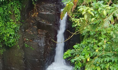 North Island tour / Waterfall