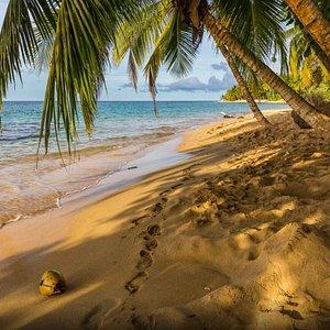 Playa Manzanillo con el tour de Touristik