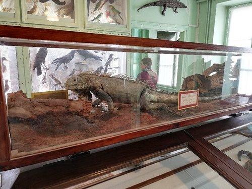 Muséum Emmanuel Liais