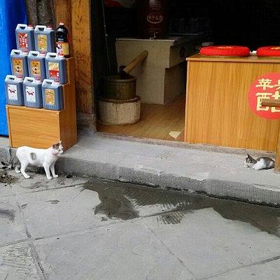 名物のお酢の店の前に猫二匹。左の子は歩行街の軽食店の看板ネコ。