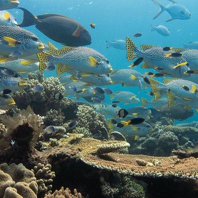 Beautiful reefs to explore