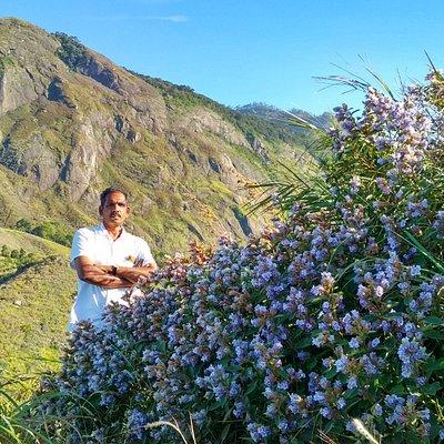 Munnar Trekking in blue mountain