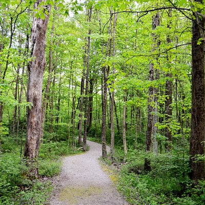 Gallant Woods