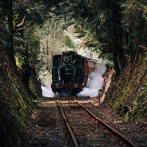 Original steam loco travelling through cool temperate rain forest