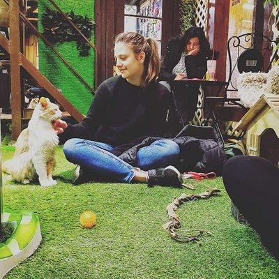 Visita disfrutando de los gatitos