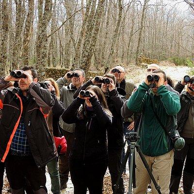Observando aves durante una ruta guiada de Iberian Nature