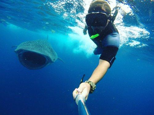 selfie Whale Shark!