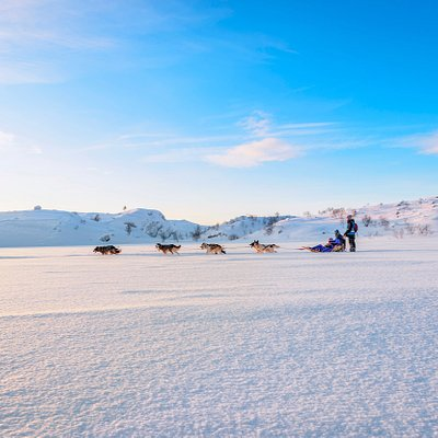 Winter Husky Safari on the fjord