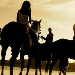 Collage students on Spring Break riding horses on the beach at Palma Sola Bay, Bradenton, Florid