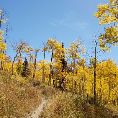 trail into the Aspen trees in the fall
